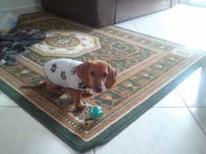 """""""Sou só mais um cãozinho brincando com sua bola"""" (Edredon)"""